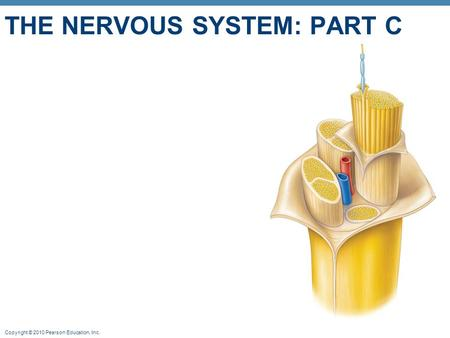 The nervous system: Part C