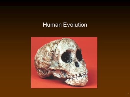 1 Human Evolution. 2 Outline Origin of Life Biological Evolution Common Descent Natural Selection Primates – Human Evolution – Evolution of Modern Humans.