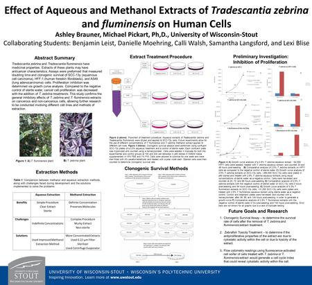 Effect of Aqueous and Methanol Extracts of Tradescantia zebrina and fluminensis on Human Cells Ashley Brauner, Michael Pickart, Ph,D., University of Wisconsin-Stout.