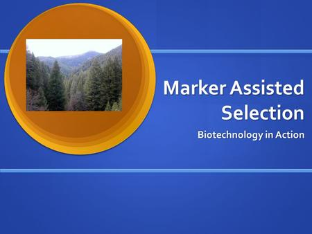 Marker Assisted Selection Biotechnology in Action.