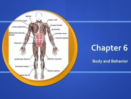 Chapter 6 Body and Behavior. Section 1 - Objective - Understand that the nervous sys- tem helps us know how messages that are sent to and from the brain.