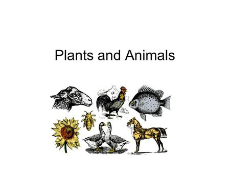 Plants and Animals. I. Plants * Most plants are produced from a seed. - there are many sizes, colors, and shapes. A. Germination - when a seed splits.