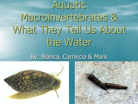 Aquatic Macroinvertebrates & What They Tell Us About the Water By: Bianca, Carnecia & Mark.