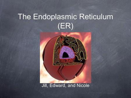The Endoplasmic Reticulum (ER) Jill, Edward, and Nicole.