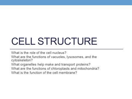 CELL STRUCTURE What is the role of the cell nucleus? What are the functions of vacuoles, lysosomes, and the cytoskeleton? What organelles help make and.