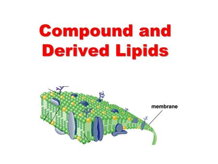 Compound and Derived Lipids. Glycerophospholipids Glycerophospholipids are:   The most abundant lipids in cell membranes.   Composed of glycerol,