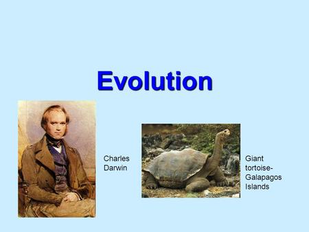 Evolution Charles Darwin Giant tortoise- Galapagos Islands.