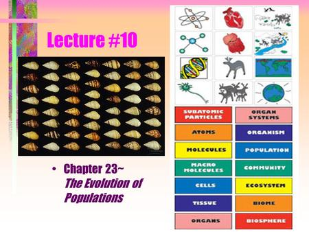 Lecture #10 Chapter 23~ The Evolution of Populations.