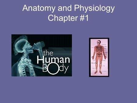HESI A2 Anatomy and Physiology Practice Test
