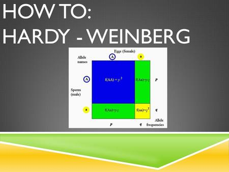 HOW TO: HARDY - WEINBERG. WHAT IS HARDY-WEINBERG?  Hardy-Weinberg says that the frequency of alleles and genotypes remain constant in a population generation.