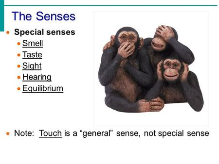 The Senses Slide 8.1 Copyright © 2003 Pearson Education, Inc. publishing as Benjamin Cummings  Special senses  Smell  Taste  Sight  Hearing  Equilibrium.