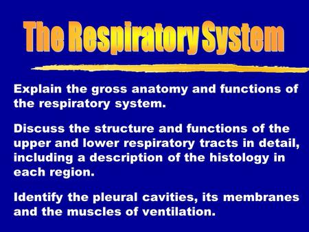 Explain the gross anatomy and functions of the respiratory system. Discuss the structure and functions of the upper and lower respiratory tracts in detail,