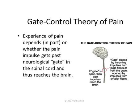 "©1999 Prentice Hall Gate-Control Theory of Pain Experience of pain depends (in part) on whether the pain impulse gets past neurological ""gate"" in the spinal."