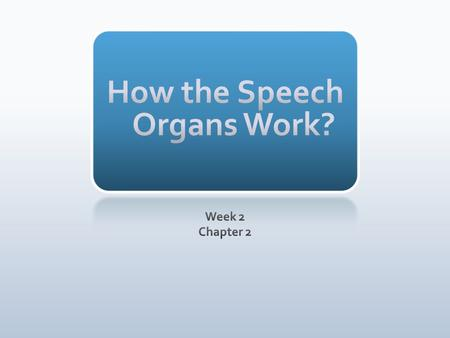 How the Speech Organs Work?