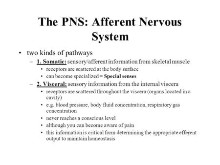 The PNS: Afferent Nervous <strong>System</strong> two kinds of pathways –1. Somatic: sensory/afferent information from skeletal muscle receptors are scattered at the body.