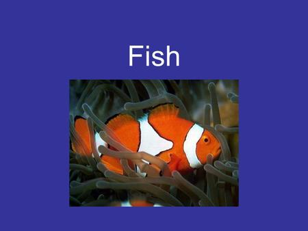 Fish. History First vertebrates –500 m.y.a. Fish are the most economically important marine organism –Fertilizer, feed, protein.