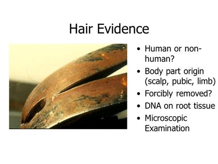 Hair Evidence Human or non- human? Body part origin (scalp, pubic, limb) Forcibly removed? DNA on root tissue Microscopic Examination.