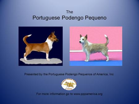The Portuguese Podengo Pequeno For more information go to www.pppamerica.org Presented by the Portuguese Podengo Pequenos of America, Inc.