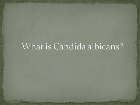 Dantwan Smith Problems with Candida albicans Distribution of C. albicans What is C. albicans? Symptoms Health related problems Favorable conditions.