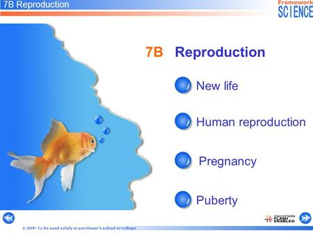 © OUP: To be used solely in purchaser's school or college 7B Reproduction New life Human reproduction Pregnancy Puberty 7B Reproduction.
