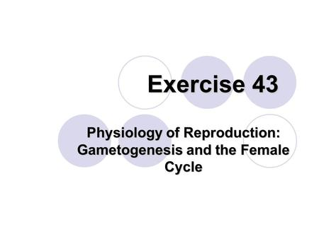 Exercise 43 Physiology of Reproduction: Gametogenesis and the Female Cycle.