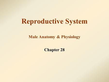 Reproductive System Male Anatomy & Physiology Chapter 28.