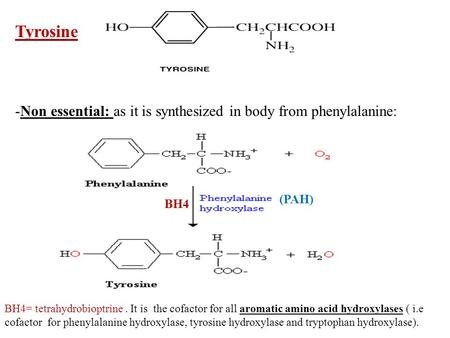 Tyrosine -Non essential: as it is synthesized in body from phenylalanine: (PAH) BH4 BH4= tetrahydrobioptrine. It is the cofactor for all aromatic amino.