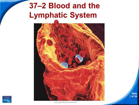 37–2 Blood and the Lymphatic System
