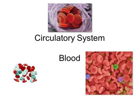 Circulatory System Blood. Blood In general, the blood is a fluid tissue helping to maintain homeostasis for all cells in the body. Transport of needed.