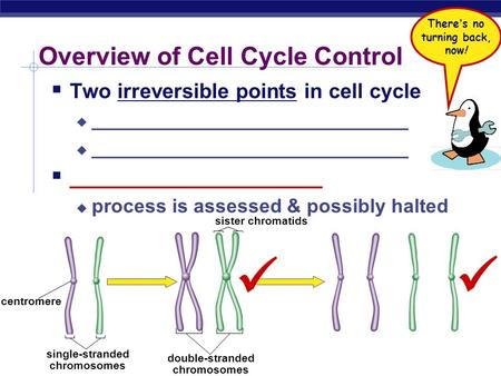 AP Biology Overview of Cell Cycle Control  Two irreversible points in cell cycle  _____________________________  ______________________  process is.