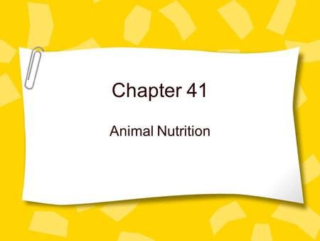 Chapter 41 Animal Nutrition. 3 Categories of Animals Omnivores-Consume plants and animals. Humans Herbivores-Consume plants Carnivores-eat other animals.