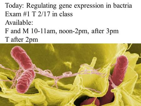 Today: Regulating gene expression in bactria Exam #1 T 2/17 in class Available: F and M 10-11am, noon-2pm, after 3pm T after 2pm.