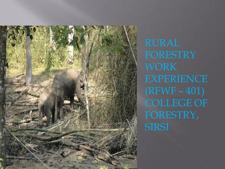 RURAL FORESTRY WORK EXPERIENCE (RFWF – 401) COLLEGE OF FORESTRY, SIRSI.