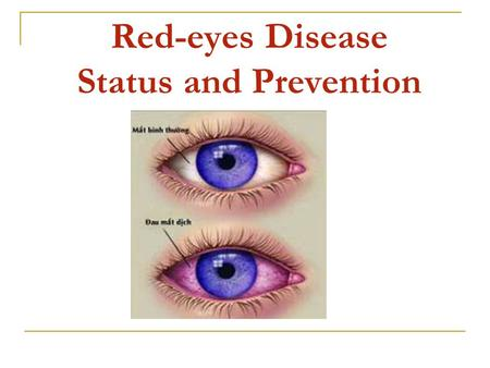 Red-eyes Disease Status and Prevention. Red-eyes disease status The red-eyes disease situation of this year is worse than every year in the past. In the.