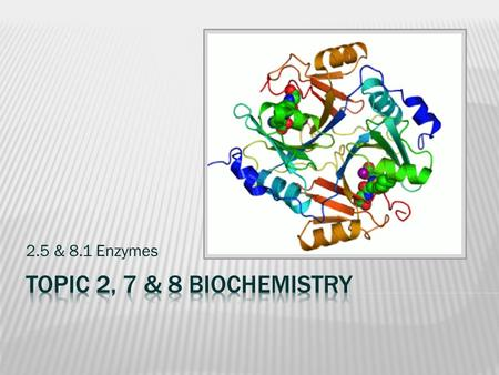 2.5 & 8.1 Enzymes. Read & Consider Understandings 2.5.1-2.5.2 & 8.1.1-8.1.2 1 - ENZYMES Challenge: by changing one letter at a time, get from 'TREAD'