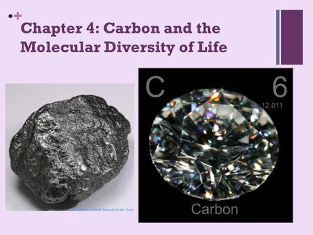 + Chapter 4: Carbon and the Molecular Diversity of Life.