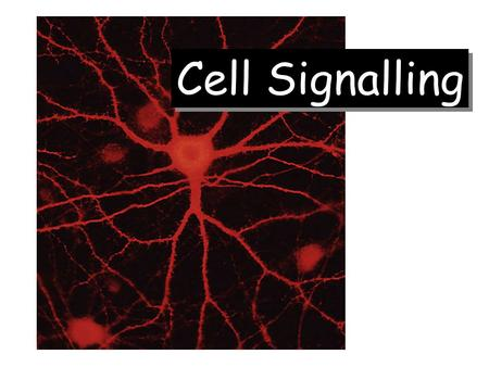 Cell Signalling. Figure source:  uk/teaching/courses/mo dules/Ercs.html Figure source:  uk/teaching/courses/mo.