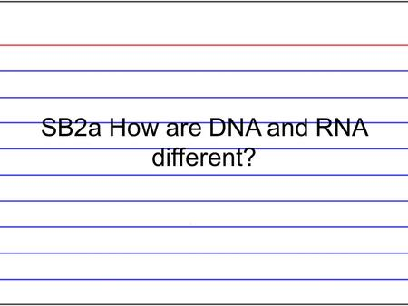 SB2a How are DNA and RNA different? DNA is double stranded and RNA is single stranded. RNA has Uracil and DNA has thymine. DNA is only in the nucleus.