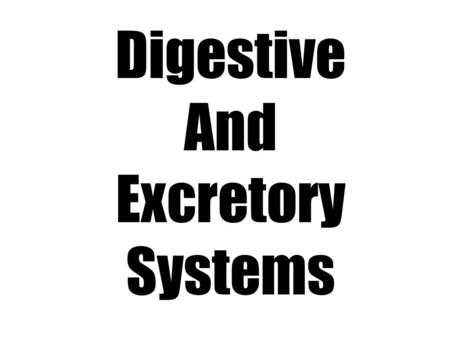 Digestive And Excretory Systems. Digestive System.