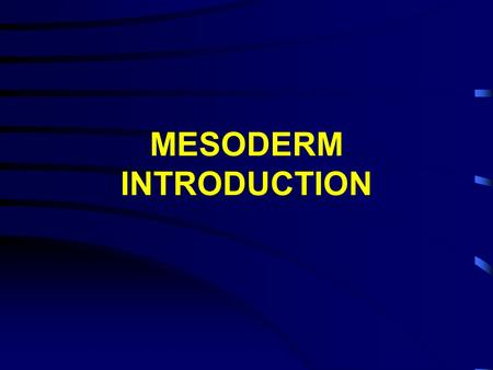MESODERM INTRODUCTION. (epimere) (hypomere) (mesomere) (nephrotome) Major mesodermal regions Amphibians.