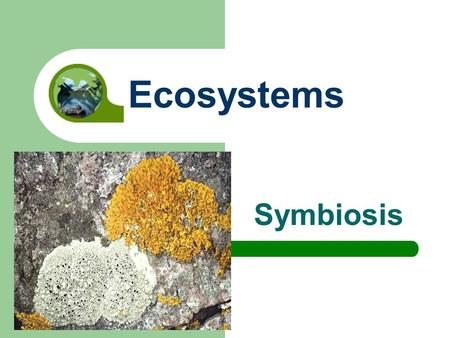 Symbiosis Ecosystems. Symbiosis Symbiosis is a close relationship between two species where at least one species benefits.