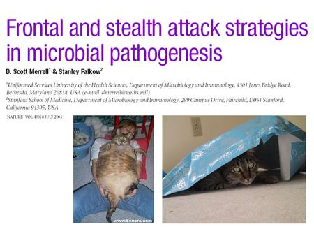 Frontal vs Stealth Attack Strategy Characteristics? –Symptoms –Timespan –Immune involvement.