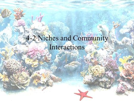 4-2 Niches and Community Interactions. The Niche Niche – Where and How something lives; its role –Habitat is the organism's address –Niche is the organism's.