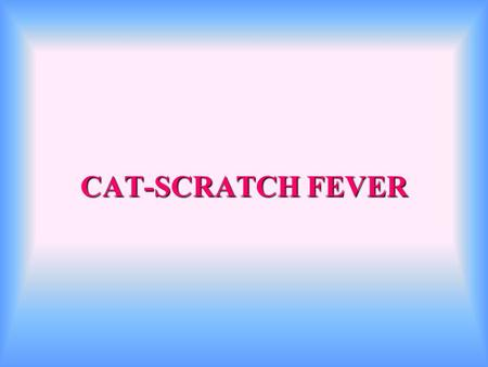 best cheapest flea medicine for cats