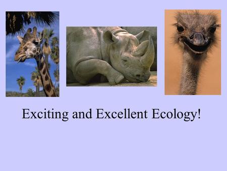 "Exciting and Excellent Ecology!. What do you think of when you hear ""ECOLOGY""?"