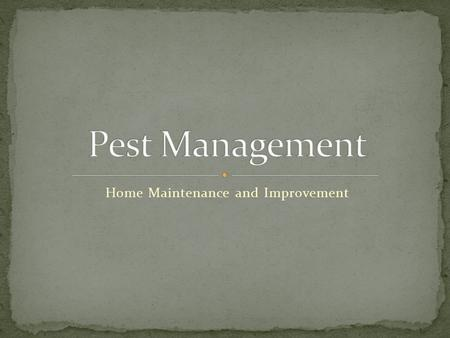 Home Maintenance and Improvement. Discuss common pests in the home Identify the effective pest control programs Discuss the Project each group is going.