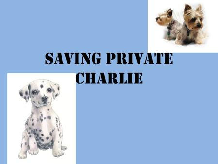 Saving Private Charlie. How Charlie Was Found Saturday night on March 27, 2010 a adorable Black lab and Pit-bull mix puppy came scratching and crying.