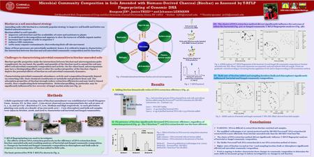 Cornell University 2009 ASA-CSSA-SSSA Meetings High C/N ratio Refugia pH & aeration Physico- chemical sorption Surface change Microbes Nutrients Amending.