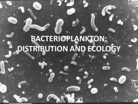 BACTERIOPLANKTON: DISTRIBUTION AND ECOLOGY. Role of bacteria in the carbon cycle.