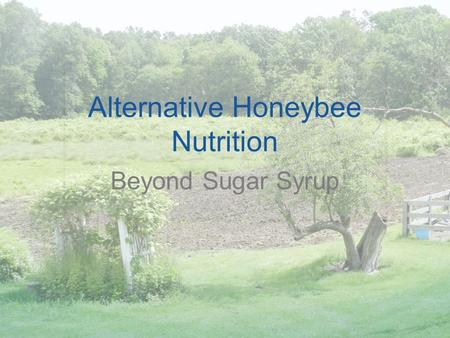Alternative Honeybee Nutrition Beyond Sugar Syrup.